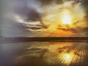 田んぼに沈む夕日